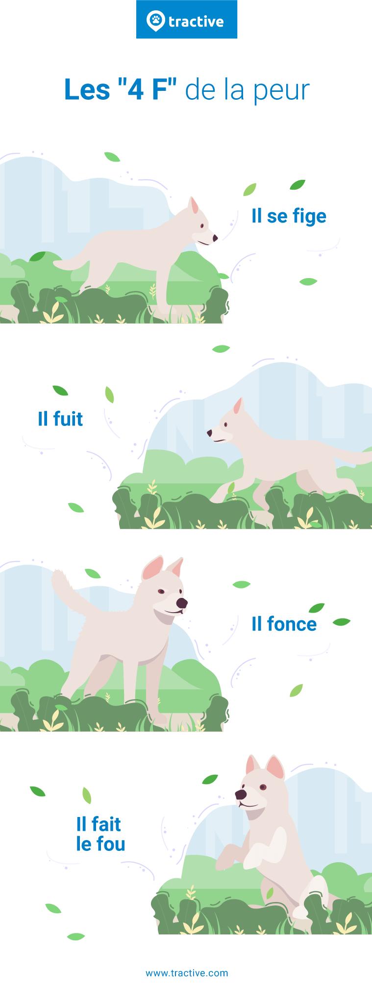 Infographie sur les 4F de la peur chez le chien (Il se fige, il fuit, il fonce, il fait le fou)