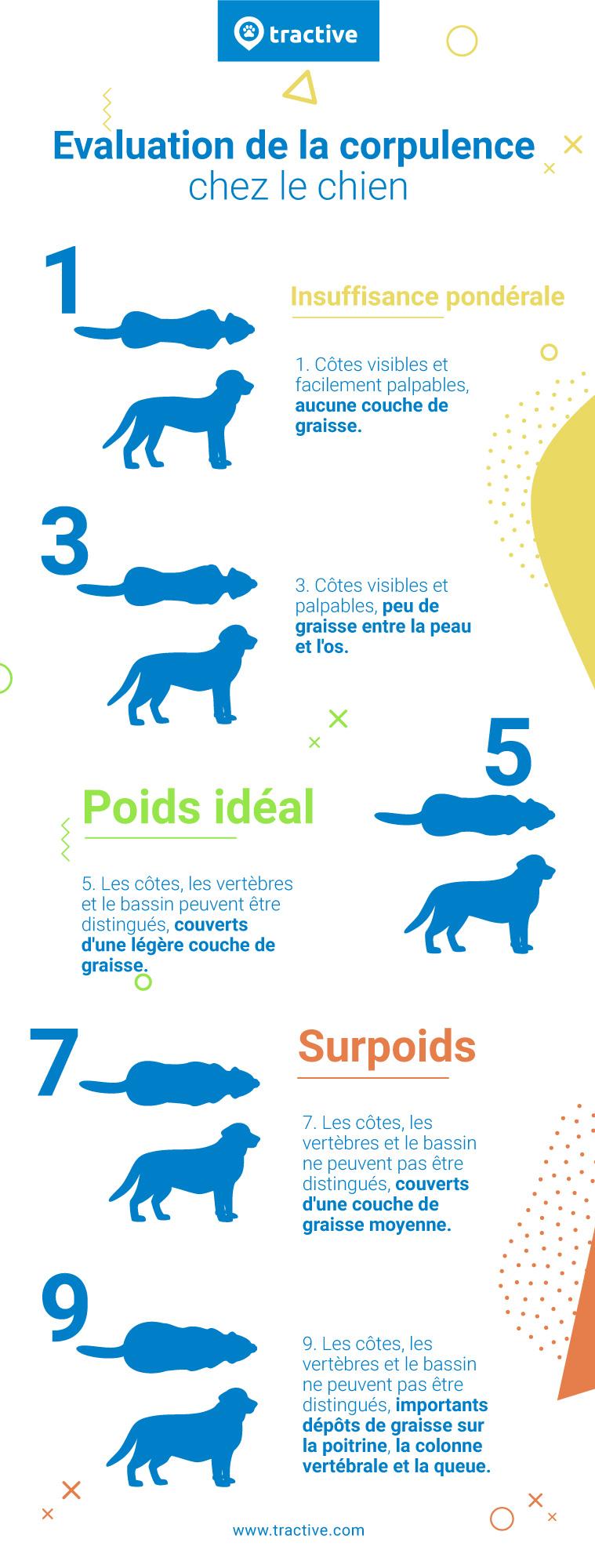 Infographie sur l'évaluation de la corpulence chez le chien