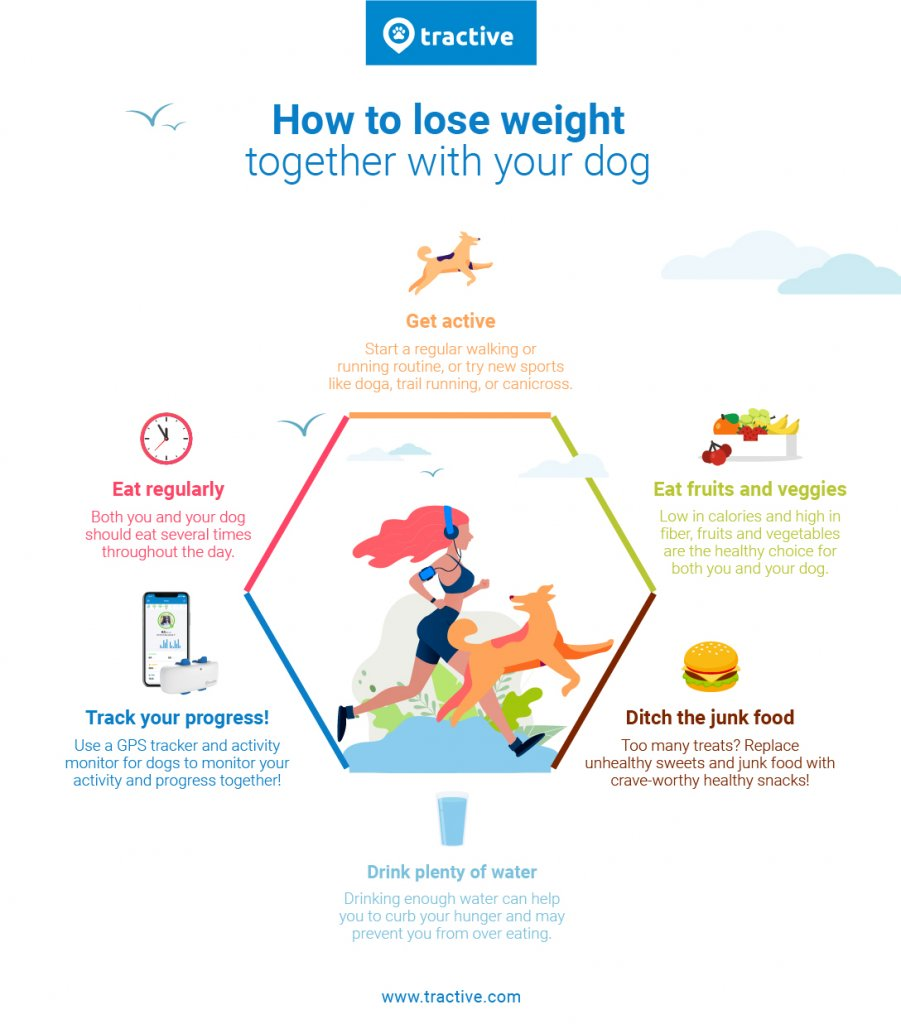 Lose weight and get fit with your dog in 6 steps - infographic