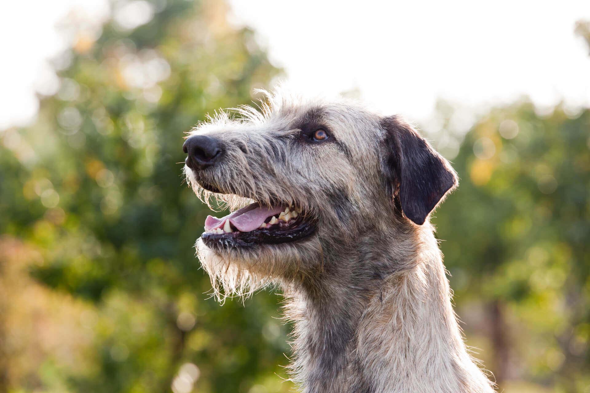 Hundejahre in Menschenjahre umrechnen: Wie alt ist dein Hund wirklich?