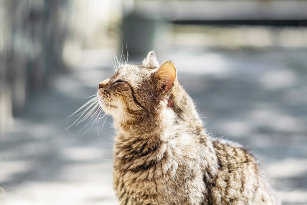 brown old cat with injury on neck - cat dementia and other illnesses