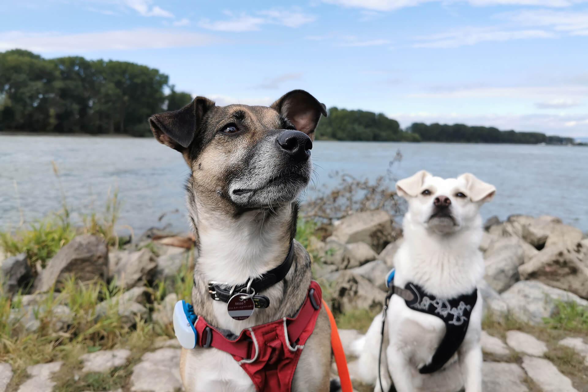 Noch mehr Schutz für entlaufene Haustiere – TASSO startet Kooperation mit Tractive