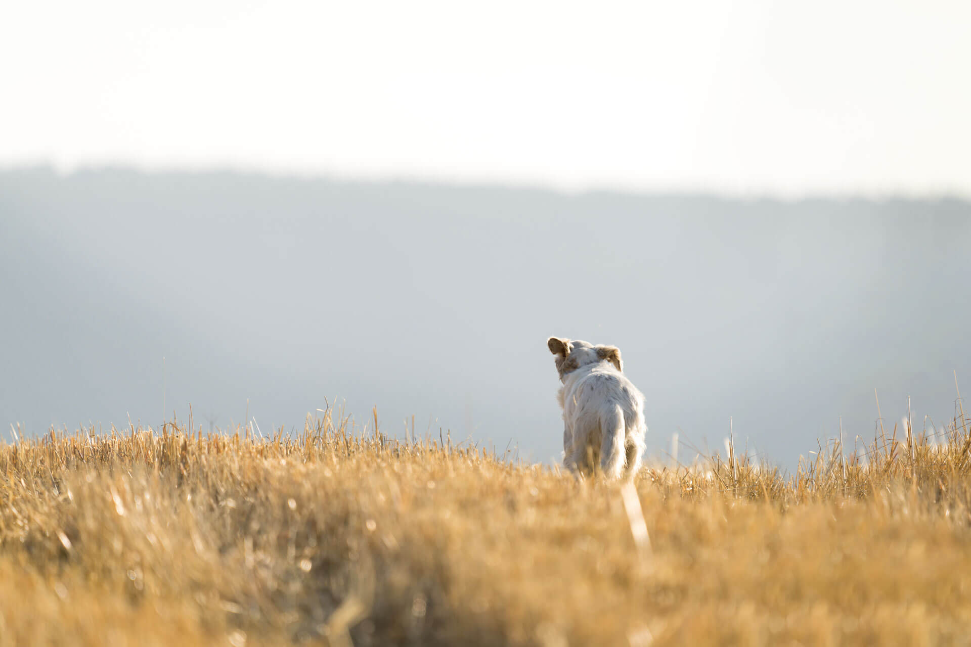 Cane che si perde: motivi e precauzioni