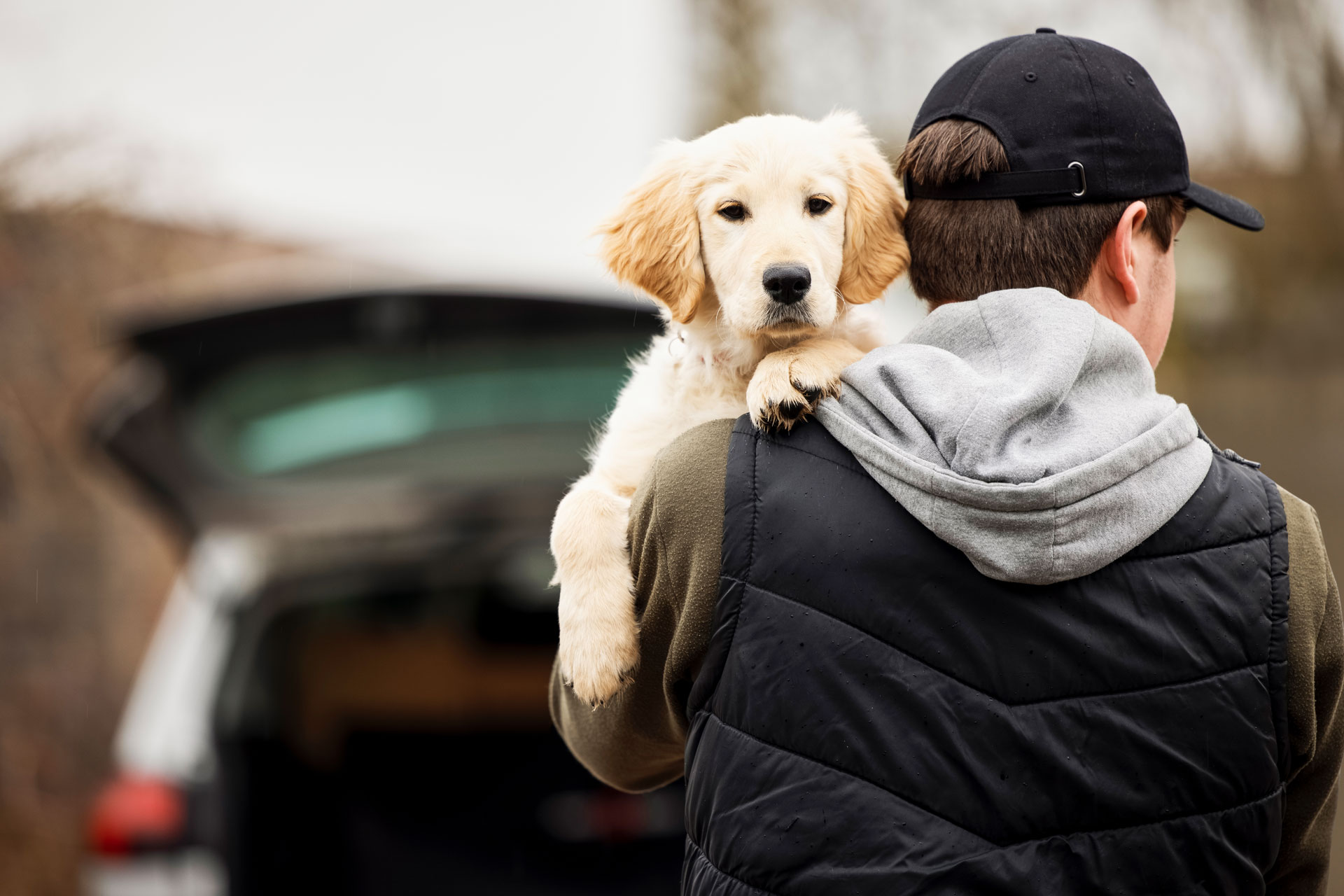 Dognapping: Pet Kidnapping And How To Keep Your Dog Safe From Dog Thieves