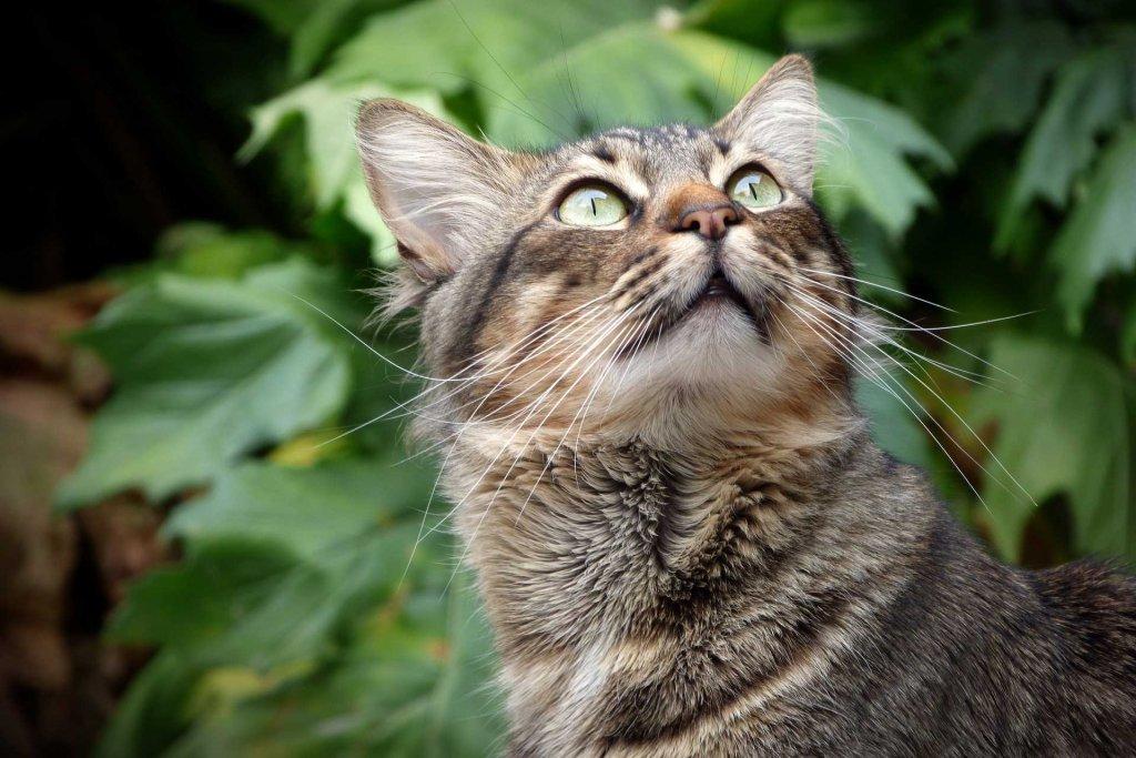 Katze hat im Wald etwas entdeckt