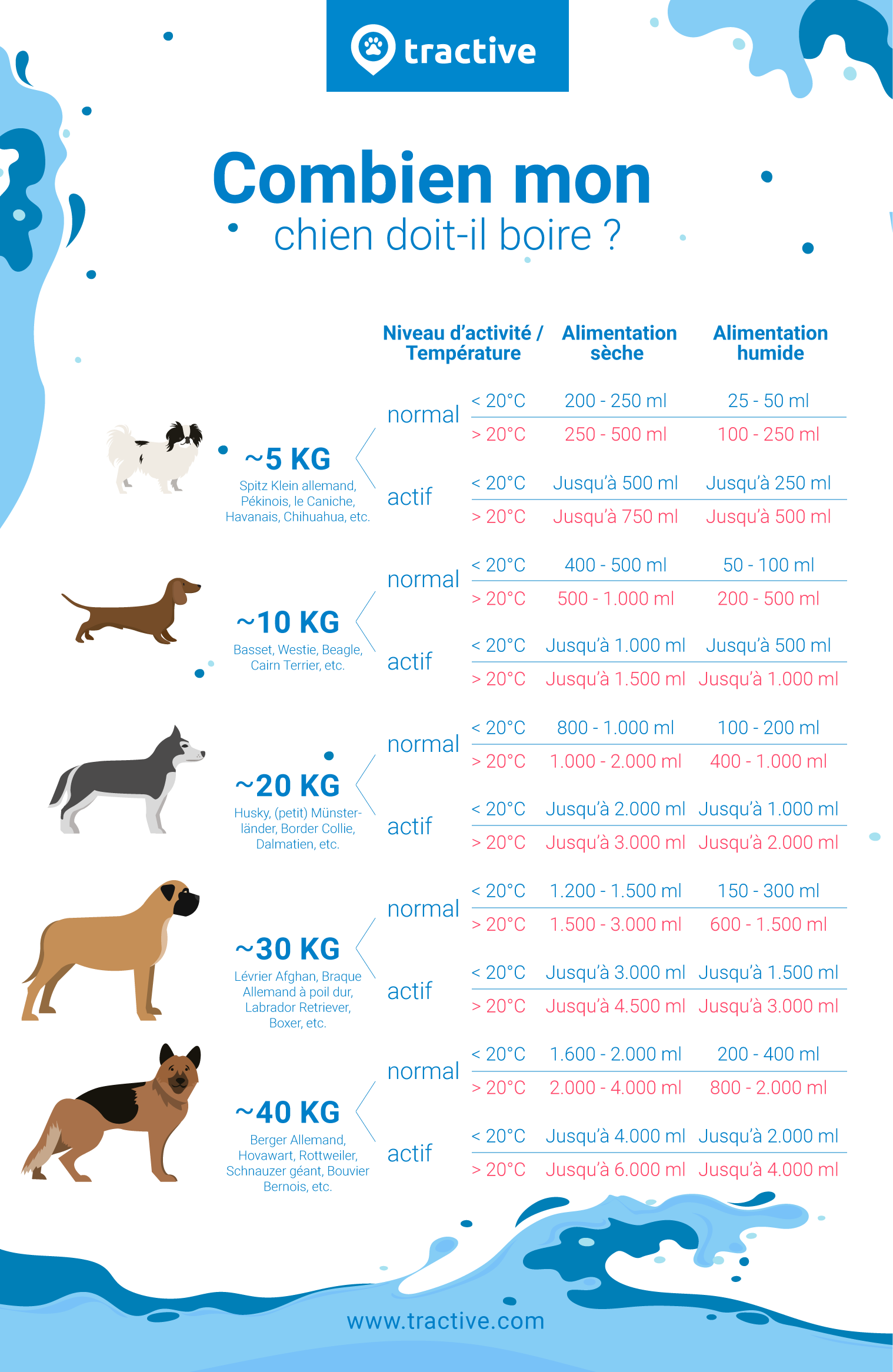 Infographie décrivant des tailles de chiens et leur besoins en eau