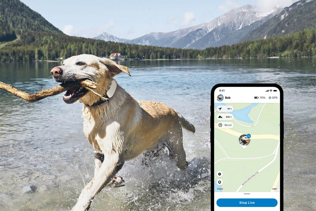 white dog carrying stick in mouth running through a lake outside,  wearing a dog tracker on the collar. Tractive GPS app screenshot example in foreground