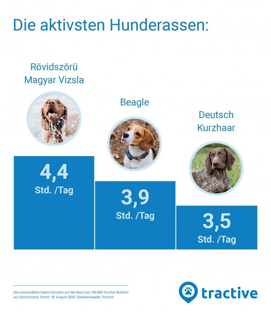 Grafik mit den aktivsten Hunderassen