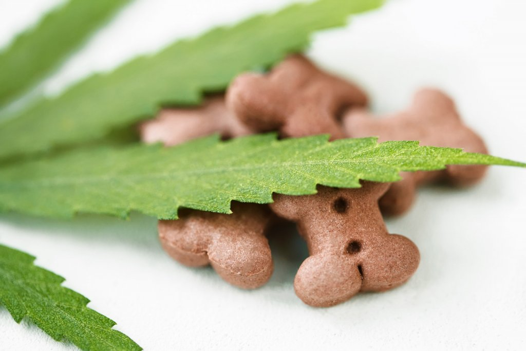 hemp leaf and cbd dog treats