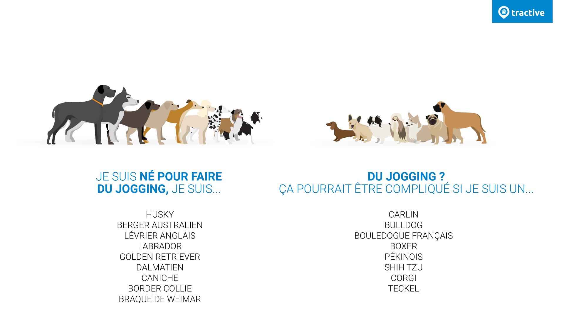 Infographie classant les races de chiens en fonction de leur capacité a courir