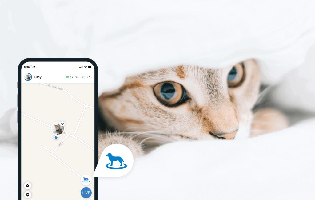 Chat caché dans une couverture et vue sur le cote d'un smartphone