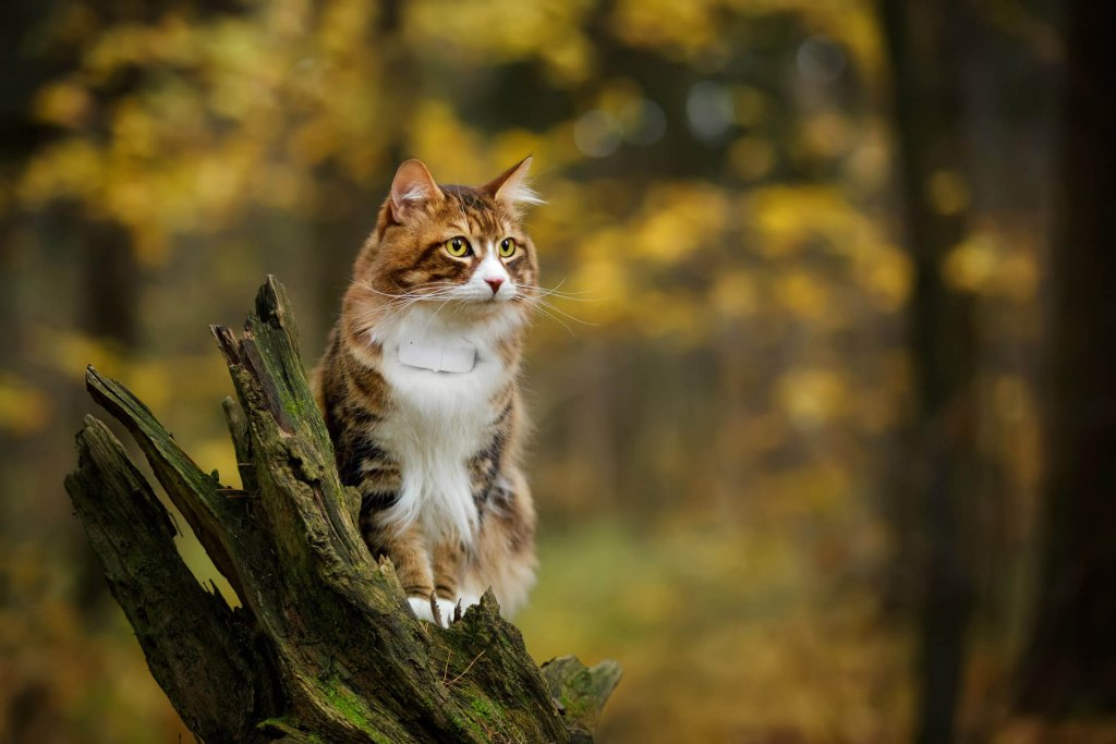 outdoor cat wearing Tractive GPS cat tracker
