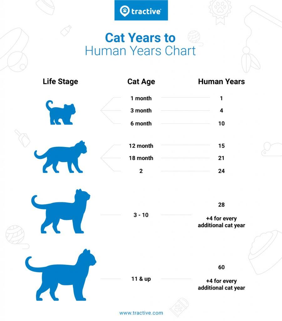 convert cat years to human years: cat years chart