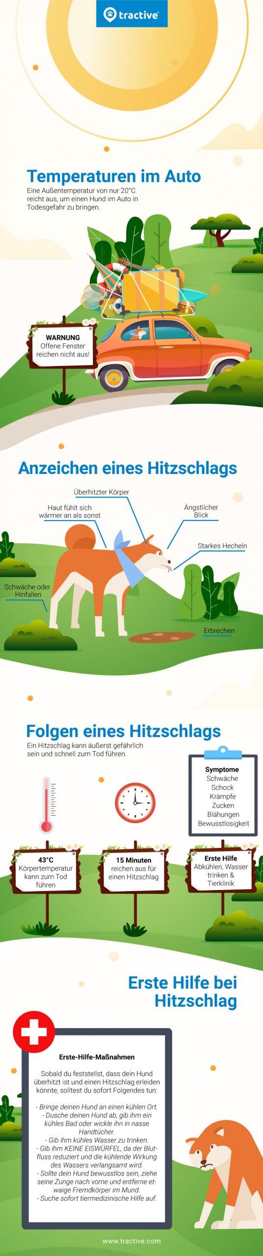 Infografik für Ursachen, Symptome und Maßnahmen bei Hitzschlag beim Hund