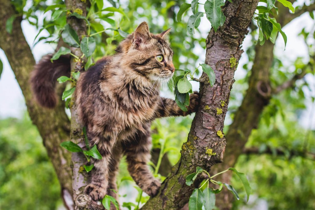 brown old cat outside in tree