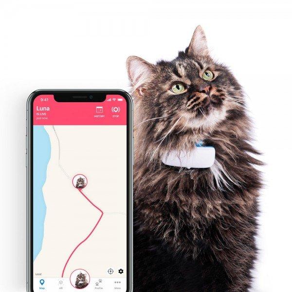 Langhaar-Katze mit Tracker am Halsband plus Positionierung in der Tractive-App in der Kartenansicht