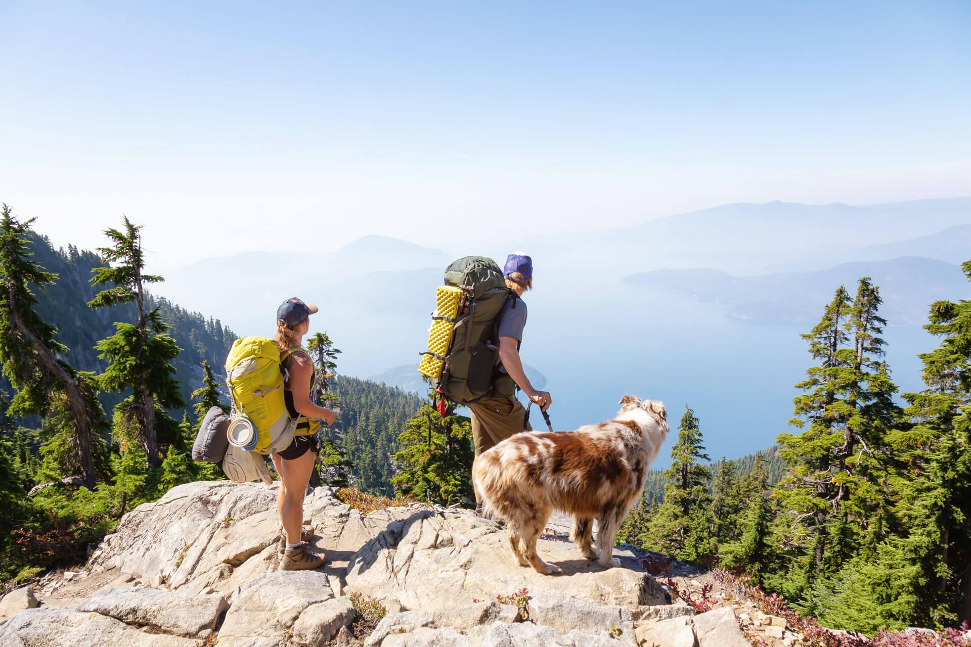Guía para hacer senderismo con perros