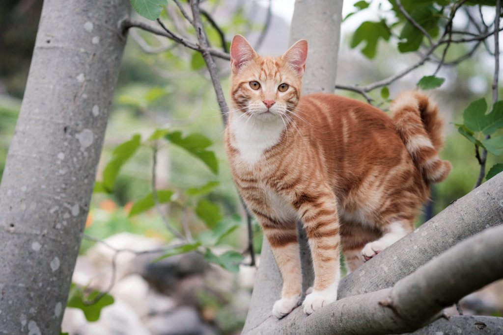 Rot-weiße Katze auf Baum