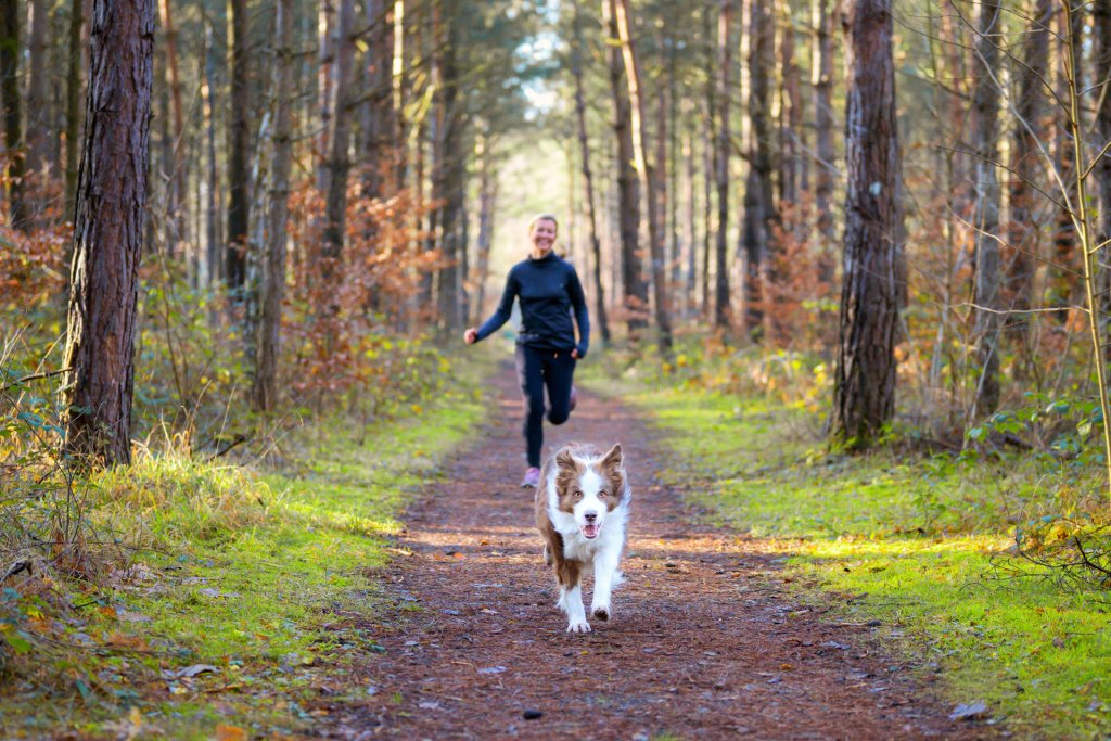 dog running down a path in the woods with a person running behind