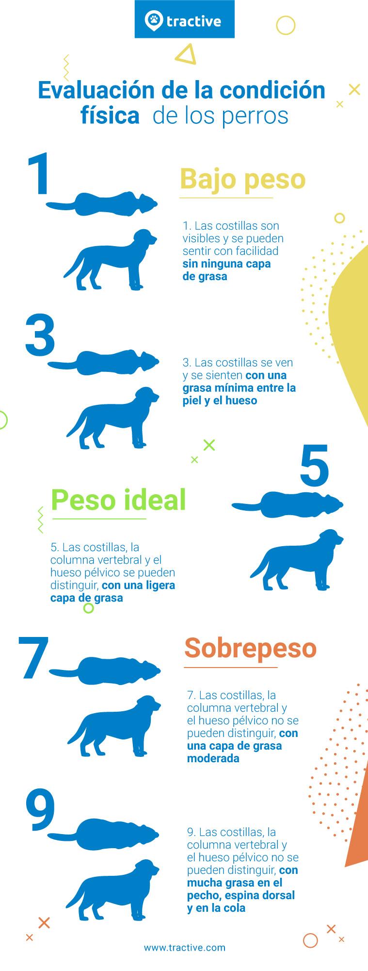 Infografía de la puntuación de la condición corporal para perros con sobrepeso