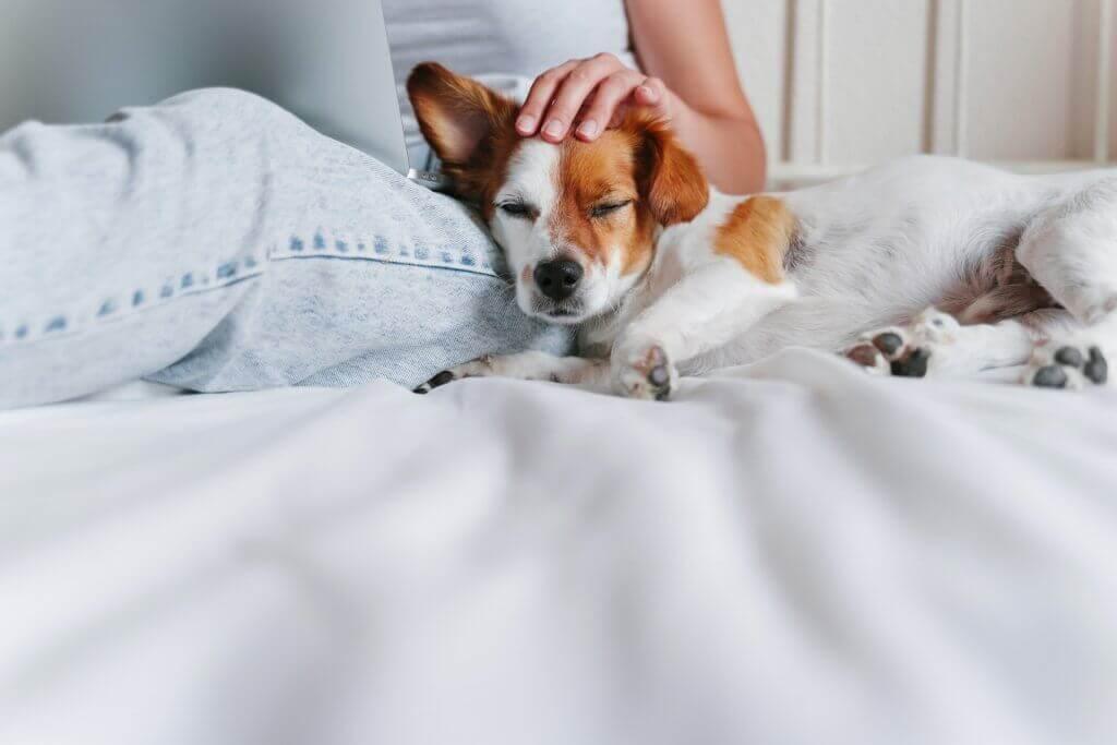 Perros y fuegos artificiales: cómo calmar a tu perro