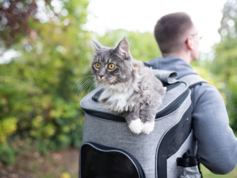 man hiking with cat in backpack cat carrier