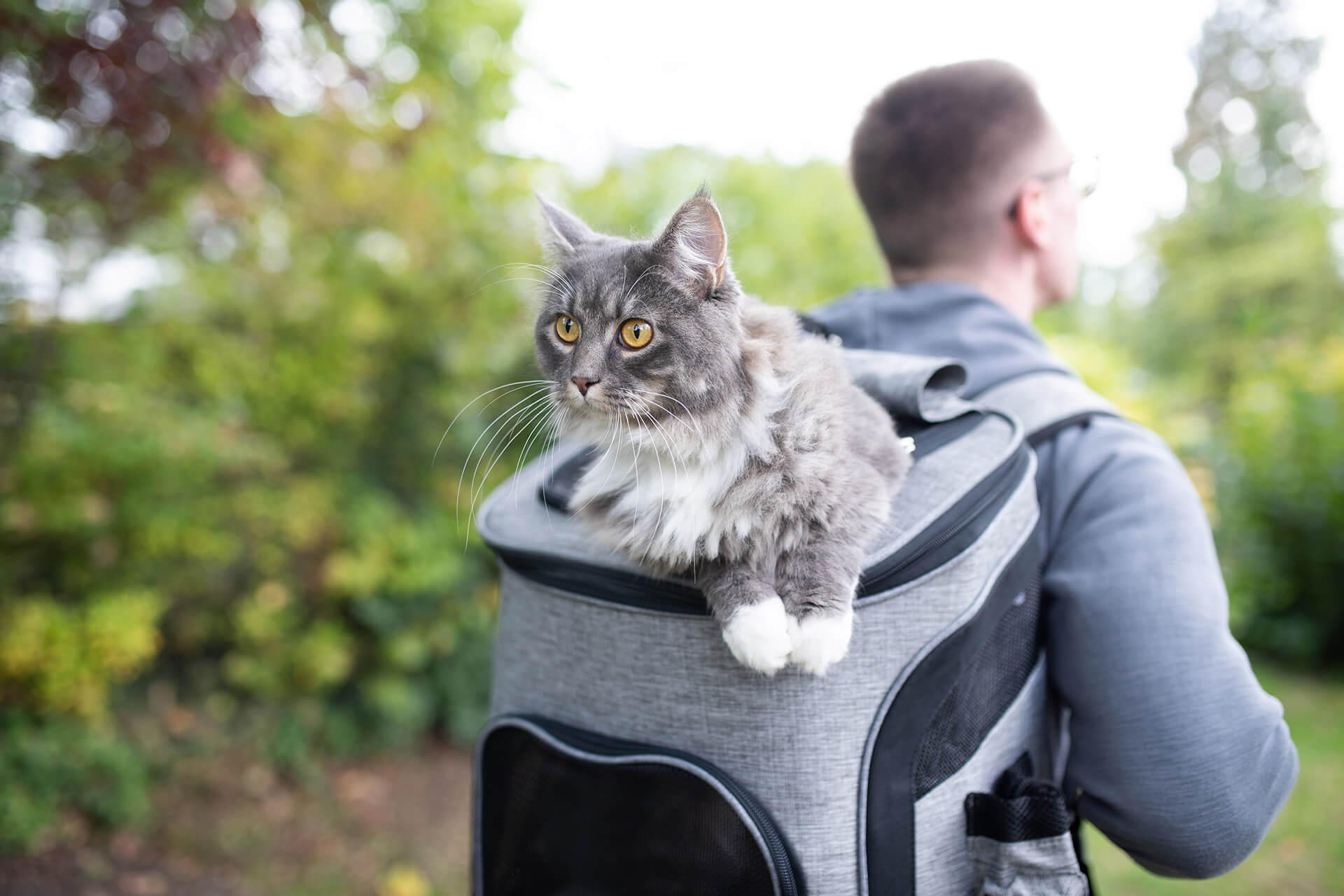 How to Hike with a Cat: Top 7 Tips for Hiking with Your Cat Safely
