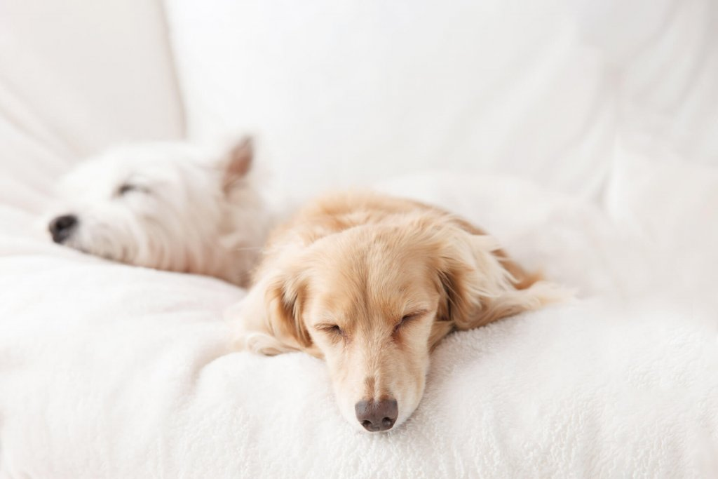two dogs sleeping next to each other