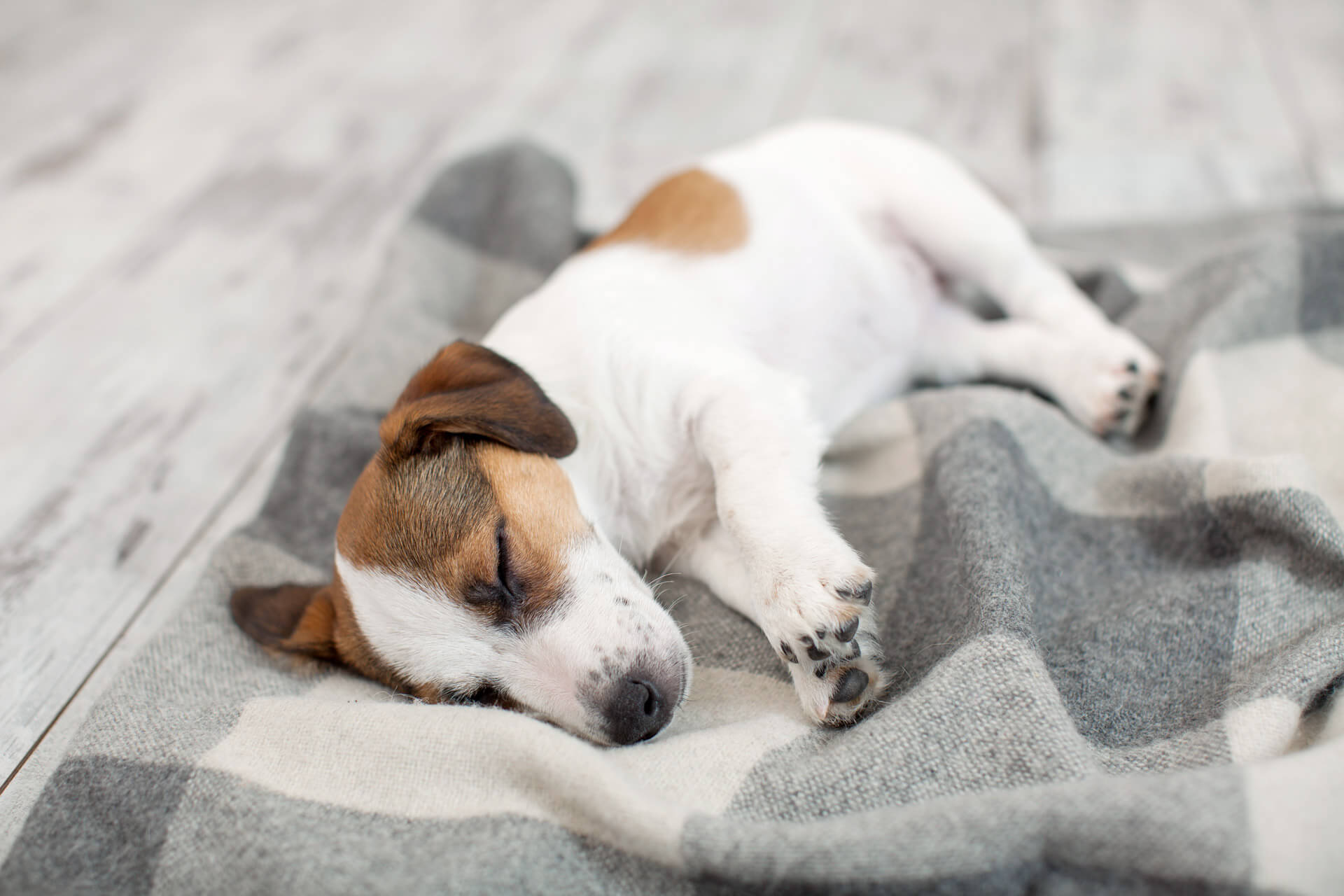 9 Dog Sleeping Positions And Their Meaning: All About Dog Sleep Behavior