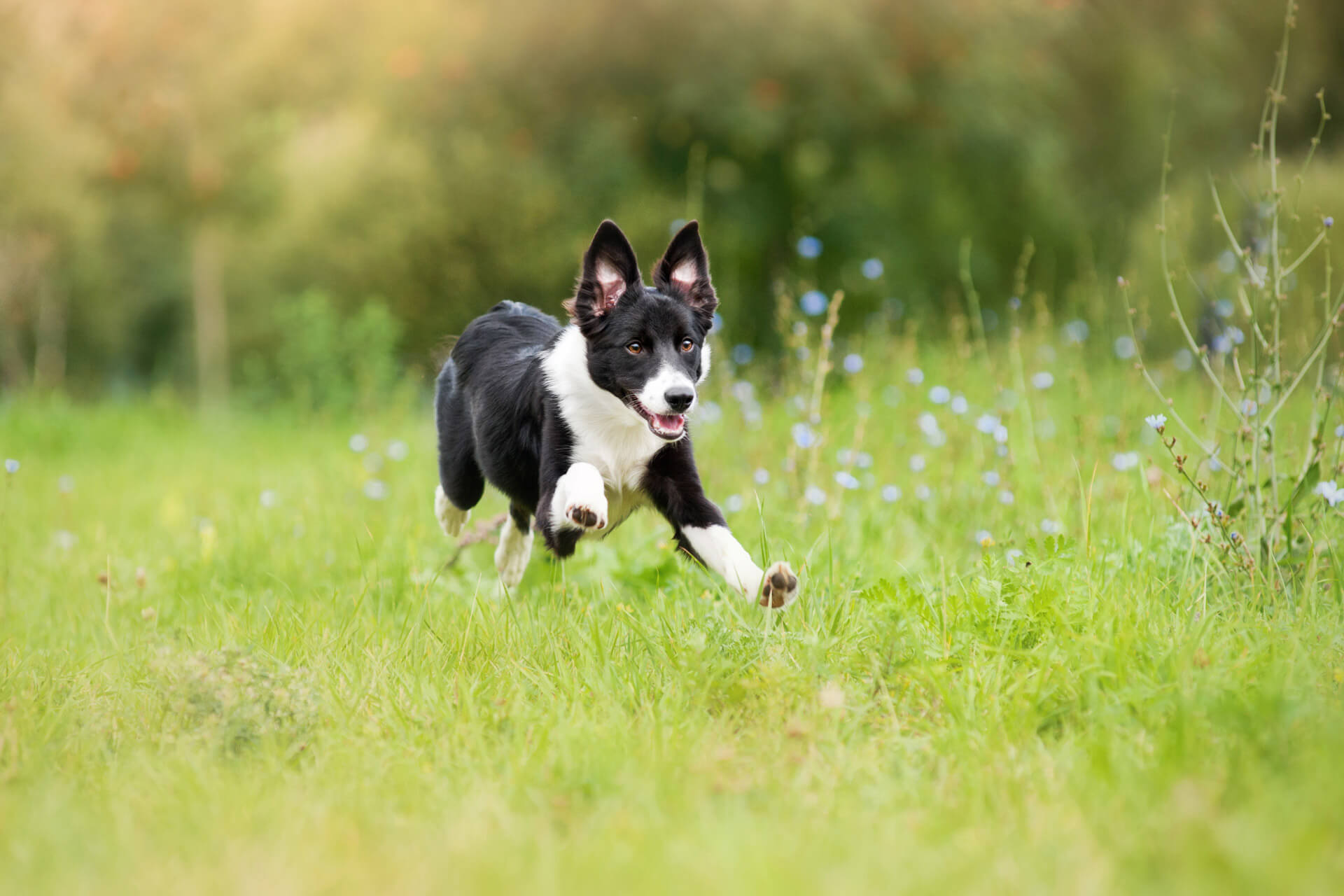 Dog Keeps Running Away? 5 Tips On How To Stop Your Dog From Running Away