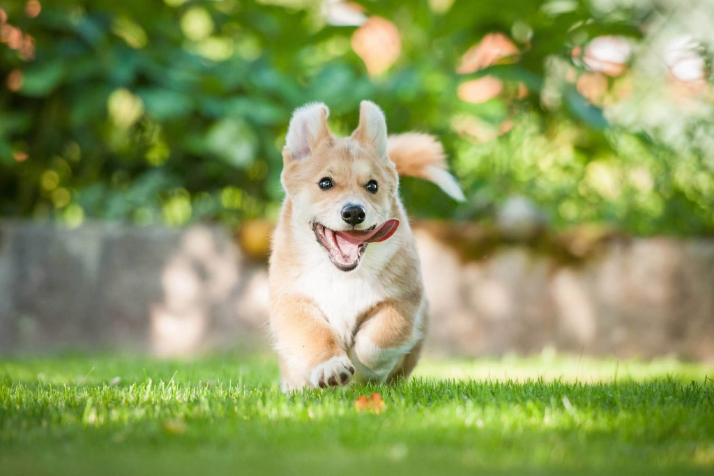 small dog running outside on the grass