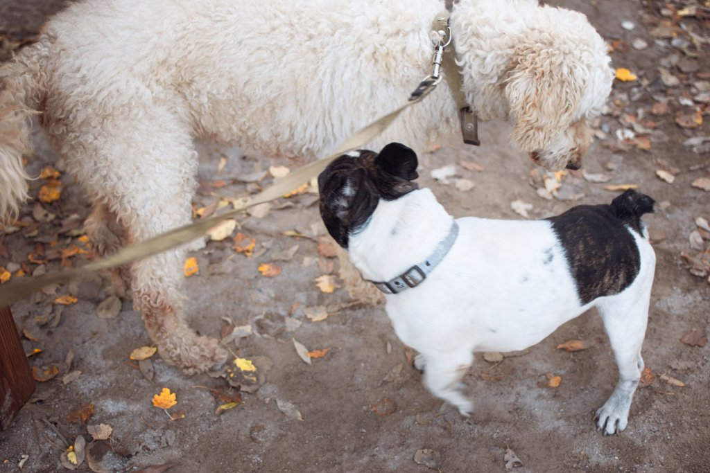 two dogs outside sniffing each other with leaves on the ground