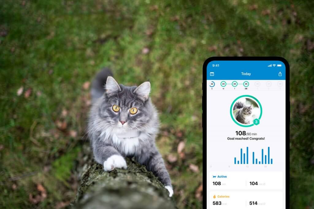 grey cat outdoors climbing a tree, tractive gps app activity tracking for cats screenshot