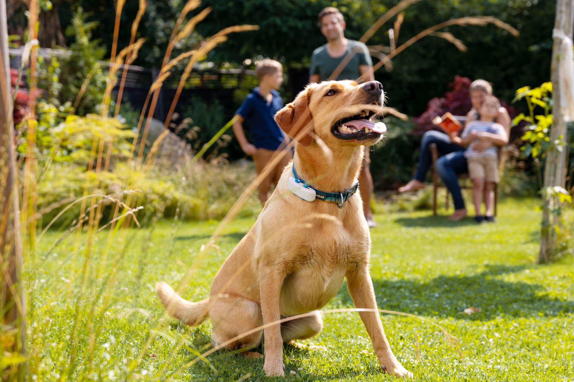 10 Reasons To Get Your Dog A GPS Tracker