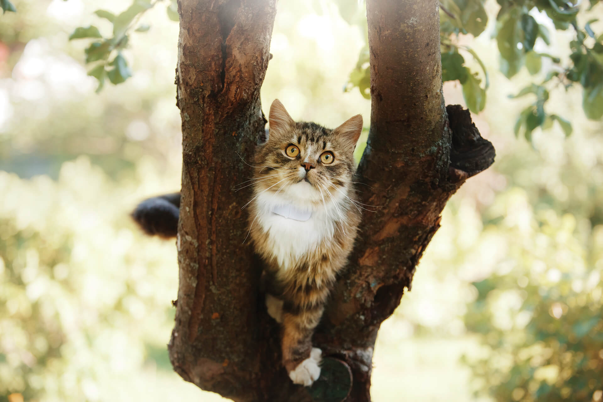 New Kitten Checklist: How To Prepare for Your New Cat