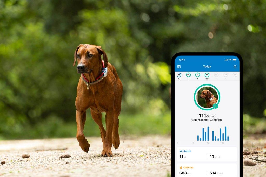 Rötlich-brauner Hund mit Tracker am Halsband läuft im Wald, Screenshot mit Aktivitätstracking im Vordergrund