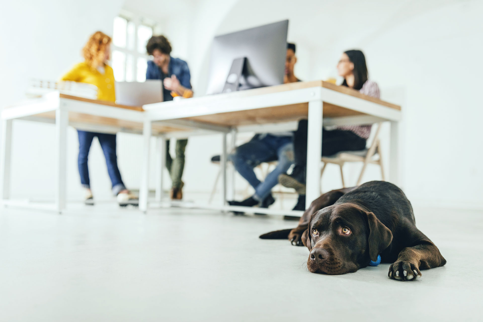 Bring Your Dog To Work: Is Your Furry Friend Office Ready?