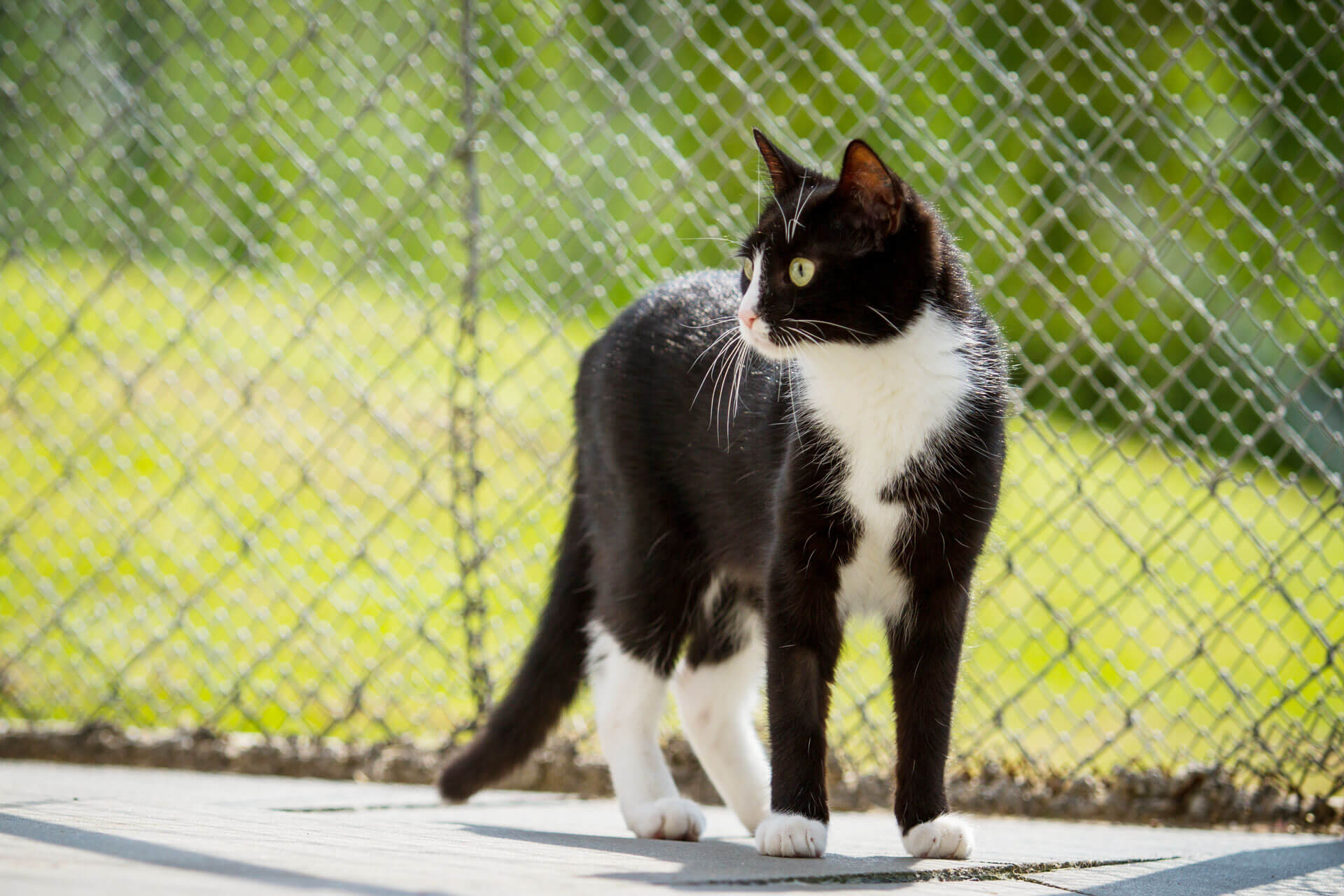 Catio: What Makes The Perfect Outdoor Cat Enclosure For Your Cat