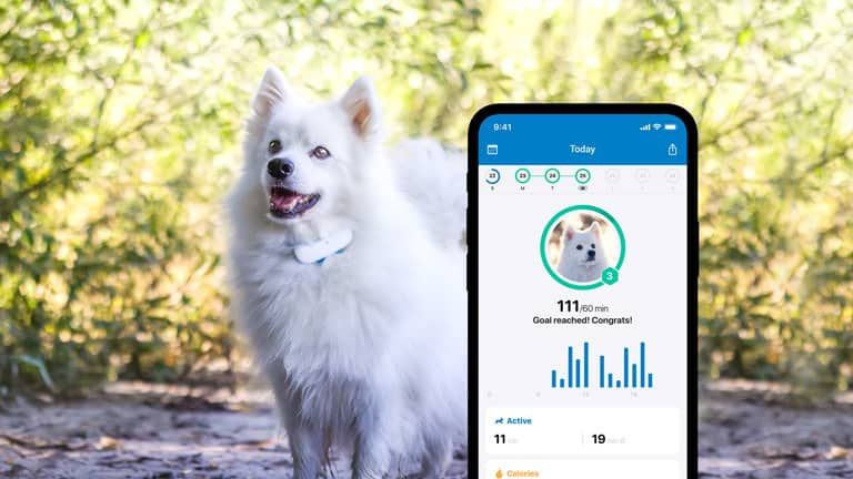 Activity monitoring with new Tractive GPS DOG 4 on smartphone